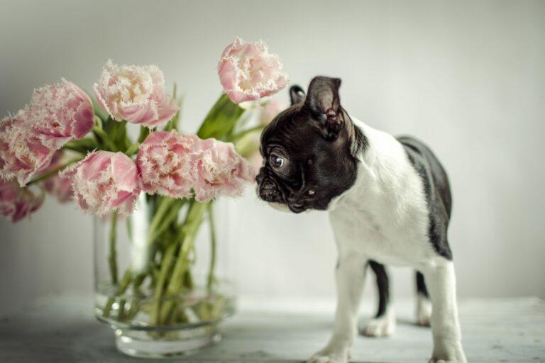 Bigstock Dog With Flowers